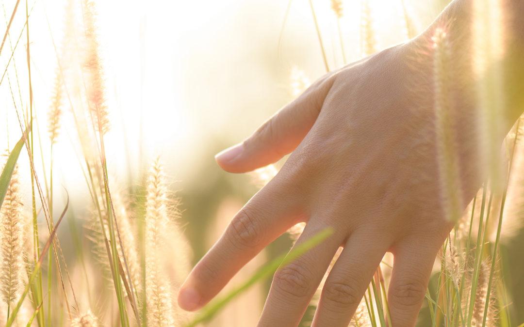 Tallers d'intercanvi d'experiències amb joves que s'han incorporat al sector agrari.